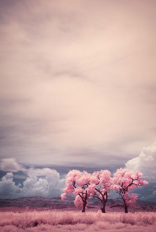 pink-pastels